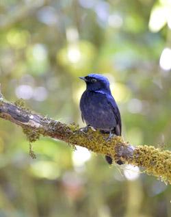 Bird Watching in Thailand