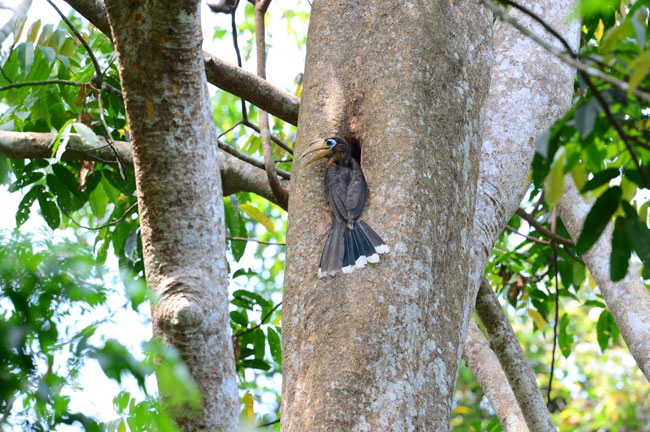 Bird @ Kaeng Krachan