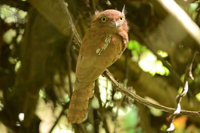 Bird @ Khao Luang