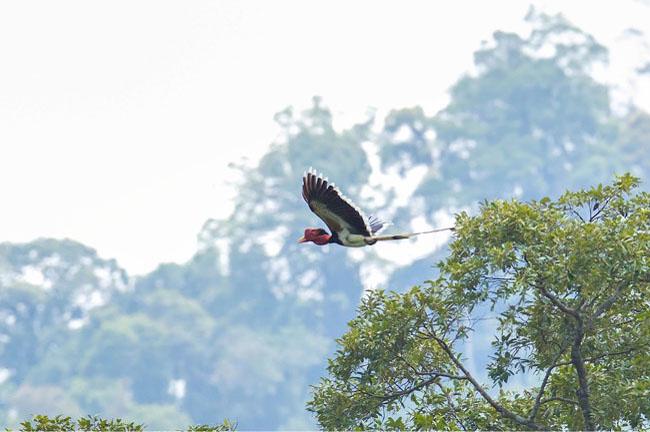 Bird @ Khao Sok