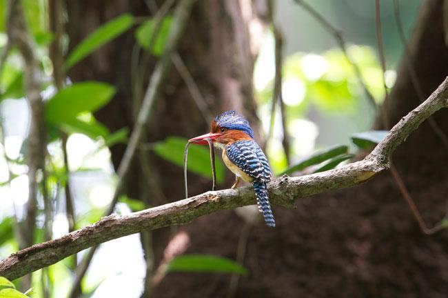 Bird @ Khok Kham