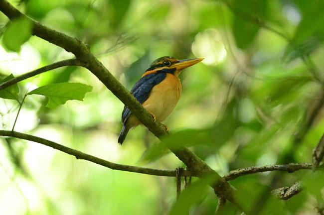 Bird @ Krabi Mangrove