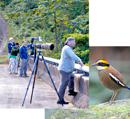 Reservation & Payment - Bird Watching in Thailand