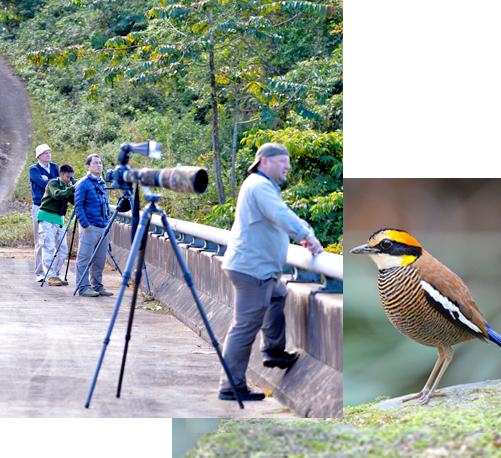Reservation & Payment - Bird Watching in Thailand