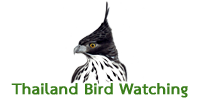 bird watching thailand logo
