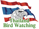 Thailand Bird Watching and Photography Tours