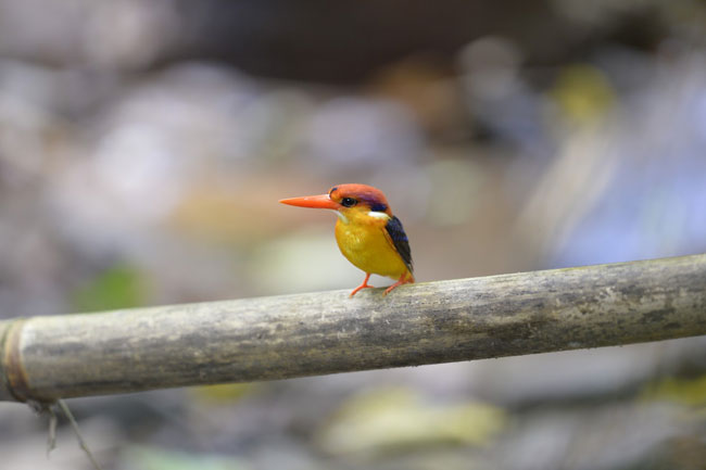 Kaeng Krachan Bird Watching 3 Days