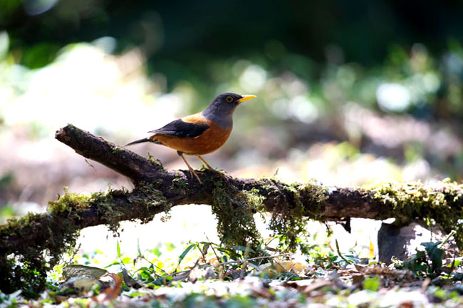 Doi Angkhang Bird Watching 3 Days Trip