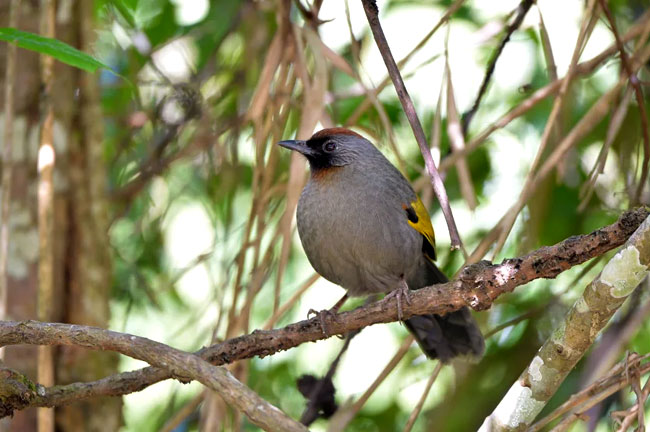 Doi Angkhang Bird Watching 3 Days Trip