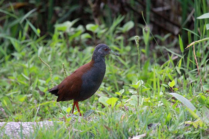 Doi Inthanon Bird Watching 3 Days Trip