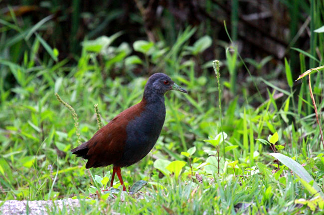 Doi Inthanon Bird Watching 3 Days Trip