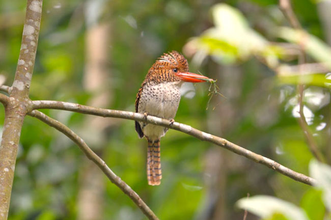 Khao Nor Chuchi Bird Watching 3 Days Trip