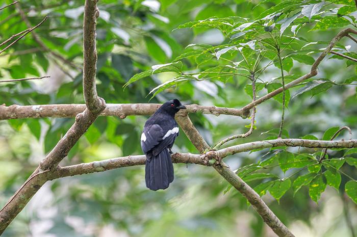 Khao Nor Chuchi Bird Watching 3 Days Trip