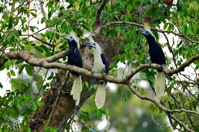 Khao Sok Bird Watching by Canoeing 3 Days