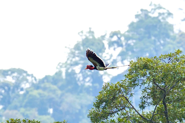 Khao Sok Bird Watching by Canoeing 3 Days