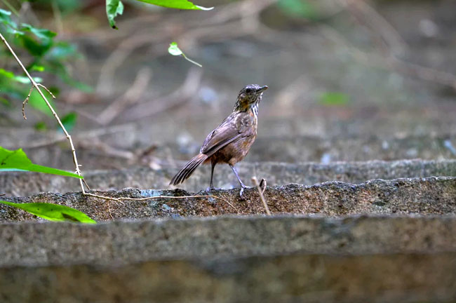 Khao Yai National Park Bird Watching 3 Days Trip