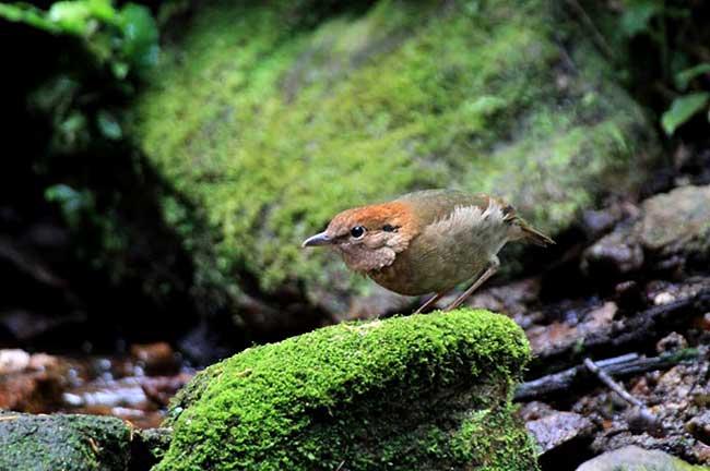 Mae Wong Bird Watching & Photography 3 Days