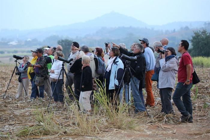 Khao Yai Bird Watching 3 Days