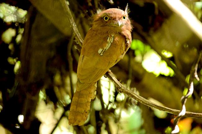 Southern Thailand Bird Watching 9 Days Trip