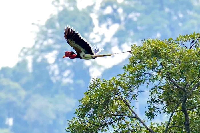 Explore Hornbill in Sri Phang-Nga & Khao Sok 5 Days