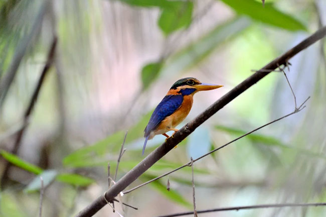 Sri Phang Nga Bird Watching Day Trip