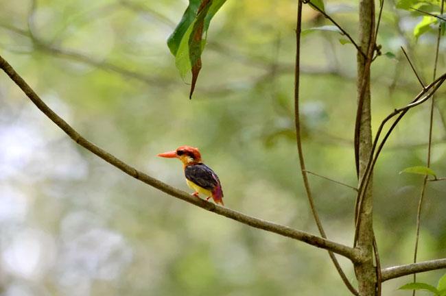 Sri Phang Nga Bird Watching Day Trip