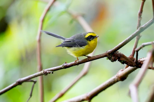Doi Inthanon Bird Watching Day Trip