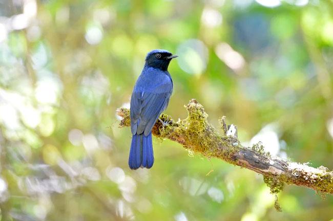 Doi Inthanon Bird Watching Day Trip