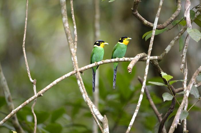 Kaeng Krachan Bird Watching 3 Days Trip