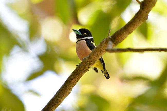 Khao Sok Bird Watching Day Trip