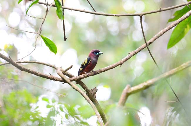 Khao Yai Bird Watching Day Trip