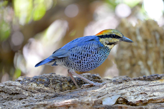 Khao Yai Bird Watching Day Trip
