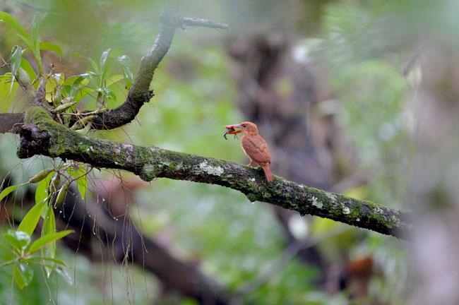 Krabi Mangrove Bird Watching Day Trip