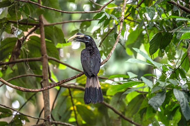 Phang Nga and Krabi Mangrove Forest Bird Watching 3 Days