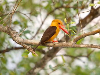 Mangrove Krabi Day Trip