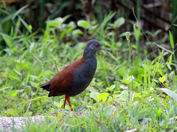 Bird Watching Multi-Day Tours